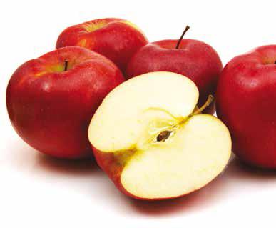Az alma téli álma